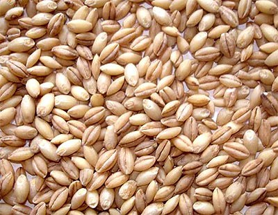 Haleem Wheat (Peeled Wheat)
